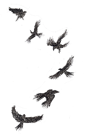 murder of flying crows