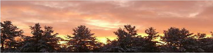 new england sunrise and trees